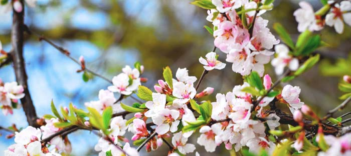 Spring is a wonderful time to enjoy shopping, dining, and the wonderful sights in Perkasie, Bucks County PA